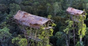 Info-budaya-suku-korowai-di-papua