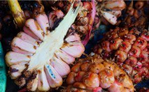Info budaya kuliner palopo Buah patikala (image bonafidenews id)