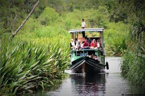 info budaya indonesia taman nasional tanjung puting menyusuri sungai waspada dengan buaya (Image : pontinesia com)