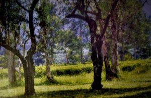 Info Budaya Indonesia Pohon teh yang tak dipetik dan dipercaya sebagai lahan perkebunan teh pertama di Malabar, Pangalengan, Jawa Barat