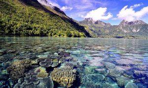 wisata alam info budaya Seperti cermin gaes Jernih banget di Ambon saleman (Image : Maringetrip)